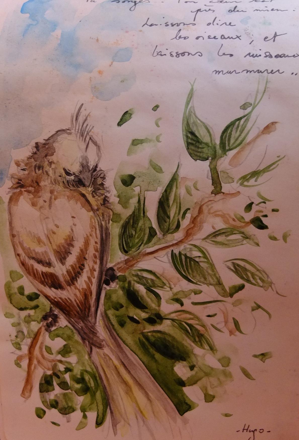 oiseau beige éthiopien